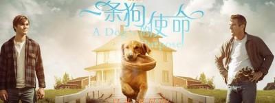 一条狗的使命2百度云BD1024p/1080p/Mp4中字」资源分享