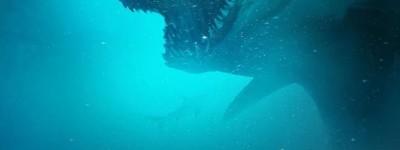 鲨海逃生百度云网盘【1080P资源】完整无删减已更新